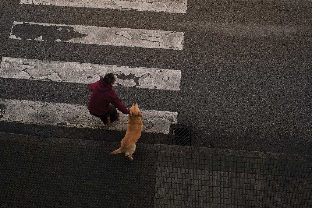 fotografía perro